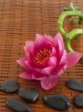 Composição dos termas com o lírio de água cor-de-rosa Imagens de Stock