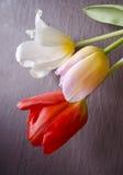 Composição festiva com tulipas bonitas Pode usar-se para cartões, convites, insetos, cartazes ou outro do feriado o projeto Fotos de Stock