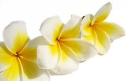Composição floral 2 fotos de stock