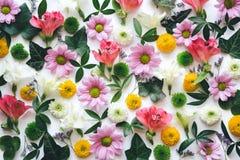 Composição floral colorida Fotos de Stock