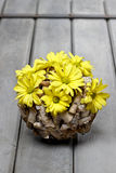 Composição floral da mola Fotos de Stock Royalty Free