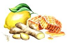 Composição fresca orgânica do gengibre, do limão e do mel Ilustração tirada mão da aquarela, isolada no fundo branco ilustração royalty free