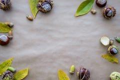Composição lisa da configuração para cartões do dia da ação de graças dos feriados do outono Os cones do pinho, carvalho ramifica Fotos de Stock Royalty Free