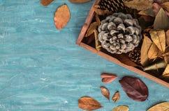 Composição lisa da configuração para cartões dos feriados do outono Os cones do pinho, carvalho ramificam, bolotas, folhas, casta Fotos de Stock Royalty Free