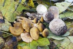 Composição outonal com cogumelos Fotos de Stock Royalty Free