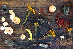 Composição sazonal da mola da flor, da baga, da maçã e do mose Imagem de Stock