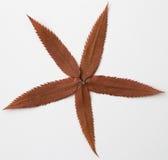 Composição seca da folha foto de stock