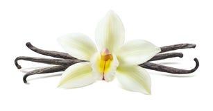 Composição simétrica da vagem da flor da baunilha isolada Fotos de Stock Royalty Free