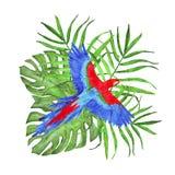 Composição tropical da aquarela com as folhas da palma e do monstera e a arara do papagaio ilustração stock