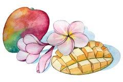 Composição tropical da aquarela Flores inteiras e cortadas do fruto e do plumeria da manga Esboço botânico com esboço de tinta pr ilustração royalty free