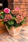 Composições bonitas das flores no patamar do countr de madeira Foto de Stock Royalty Free