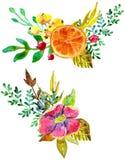 Composições da flor da aquarela Fotos de Stock