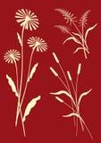 Composições florais - vetor Fotografia de Stock