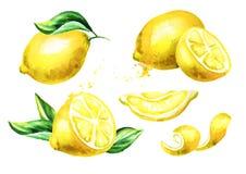 Composições frescas do fruto do limão ajustadas Ilustração tirada mão da aquarela ilustração do vetor