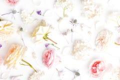 Composi??o festiva da flor no fundo branco Vista a?rea fotos de stock