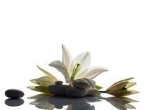 Composición con el lirio y las piedras Foto de archivo libre de regalías