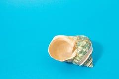 Composición con la concha marina Fotos de archivo