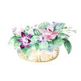 Composición con la orquídea de las flores en la cesta Fotografía de archivo