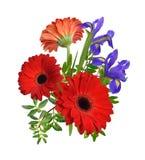 Composición con las flores rojas del gerbera y del iris Aislado Fotos de archivo