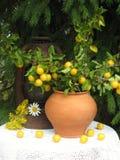 Composición con las frutas Fotografía de archivo libre de regalías
