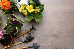 Composición con las plantas hermosas y las herramientas que cultivan un huerto Fotografía de archivo libre de regalías