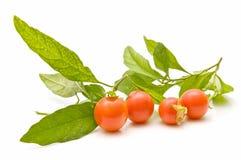 Composición con los tomates de cereza Imágenes de archivo libres de regalías