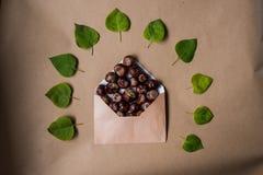 Composición con una letra y las castañas interiores y caidas Imagen de archivo libre de regalías