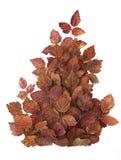 Composición creativa de las hojas de otoño rojas Aislado en blanco Fotos de archivo