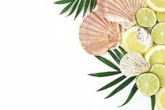 Composición de conchas marinas, de ostras, de la cal y de limones exóticos en las hojas de palma verdes enormes aisladas en el fo imagen de archivo libre de regalías