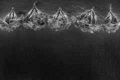 Composición de flores en la luz de neón fotografía de archivo