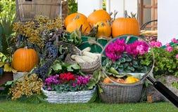 Composición de frutas y de flores debajo de la lupa foto de archivo