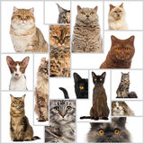 Composición de gatos Imagen de archivo libre de regalías