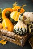 Composición de la acción de gracias del otoño Foto de archivo libre de regalías