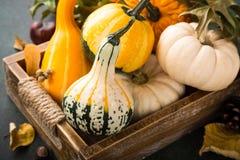 Composición de la acción de gracias del otoño Fotos de archivo