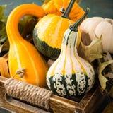 Composición de la acción de gracias del otoño Imágenes de archivo libres de regalías