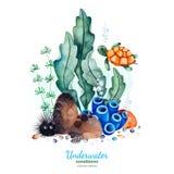 Composición de la acuarela con los corales, las conchas marinas, las algas marinas y la tortuga multicolores stock de ilustración