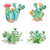 Composición de la acuarela con los succulents, los cactus y la regadera