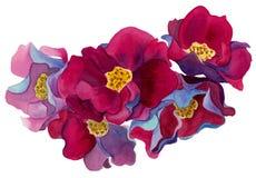 Composición de la acuarela de flores con rosa y las sombras rojas de los pétalos, azules y violetas ilustración del vector