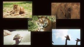 Composición de la fauna de los animales almacen de metraje de vídeo
