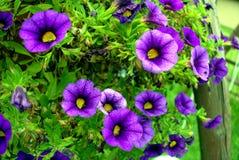 Composición de la flor Imagen de archivo libre de regalías