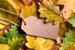Composición de la hoja del otoño, etiqueta de papel Tiro del estudio, parte posterior de madera Imagen de archivo libre de regalías