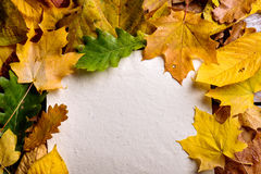 Composición de la hoja del otoño, hoja de papel Tiro del estudio Imagenes de archivo
