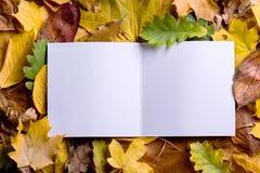 Composición de la hoja del otoño, tarjeta de felicitación Tiro del estudio, parte posterior de madera Fotos de archivo libres de regalías
