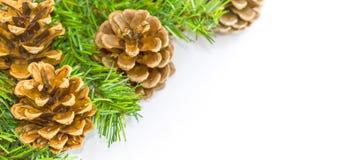 Composición de la Navidad Hecho de pino Fondo blanco imágenes de archivo libres de regalías