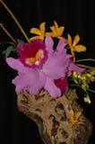 Composición de la orquídea Imagen de archivo libre de regalías