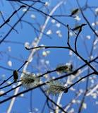 Composición de la primavera Imágenes de archivo libres de regalías