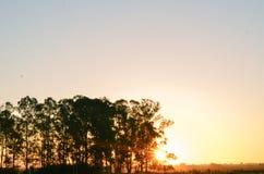 Composición de la puesta del sol foto de archivo libre de regalías