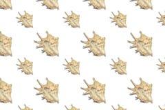 Composición de las cáscaras exóticas del mar en un fondo blanco fotografía de archivo
