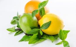Composición de las hojas de la naranja y de la cal y de menta del limón Imágenes de archivo libres de regalías