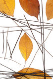 Composición de las hojas de otoño y de los espaguetis negros del arroz Foto de archivo libre de regalías
